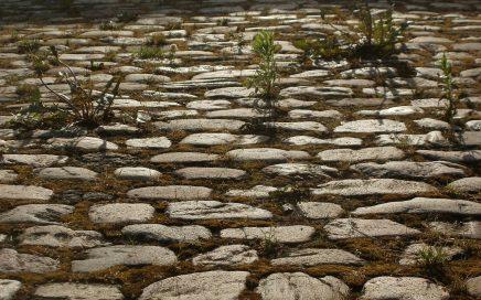 Bicarbonate pour éliminer les mauvaises herbes